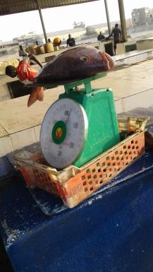 fish-najil