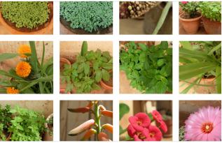 home-plants
