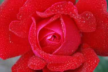 flower-plant-nature-lilac-86419
