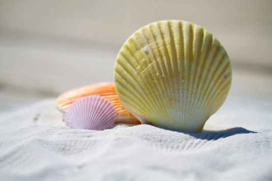 shells-massage-therapy-sand