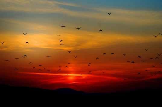 sunset-birds-flying-sky-70577